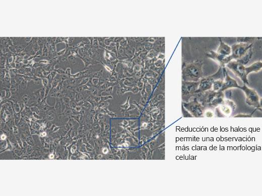 Modo de cultivo celular