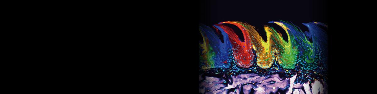 Applications: Fluorescenceimaging