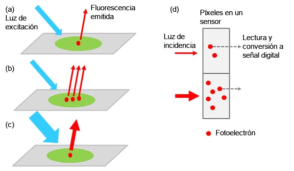 Figura 1: De la muestra a la señal digital: a) objetivo excitado con etiquetado que emite luz de fluorescencia. La intensidad de la luz aumenta cuando hay más objetivos en la muestra (b) o sea aplica una luz de excitación más fuerte (c). La intensidad de la señal es proporcional a la intensidad de la luz incidente (d).