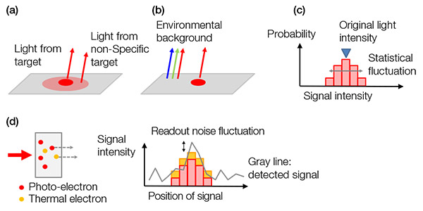 Figure 4 – Examples of background noises: (a) biological background from a non-specific stain or autofluorescence, (b) environment light from the room reflected on a slide, (c) shot noise, (d) noises in a camera that contain thermal electrons generated in a sensor (left) and readout noise (right). Thermal electrons can be reduced by cooling the sensor.