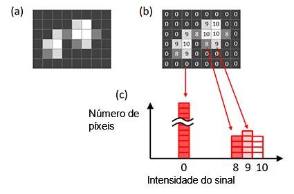 Figura 6 — Um histograma de uma imagem. (a) Imagem original, (b) intensidade do sinal de cada píxel mostrado na imagem original, (c) um histograma criado com base na imagem original.