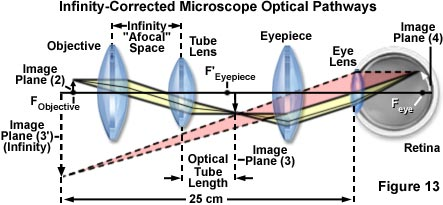 Microscope optical components introduction in summary ray paths through both finite tube length and infinity corrected microscopes are reviewed and illustrated in figures 12 and 13 ccuart Gallery