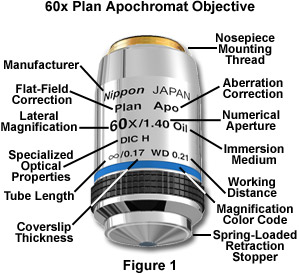 Anatomy of the Microscope - Objectives: Specifications and