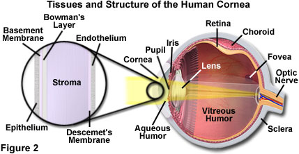 The physics of light and color human vision and color perception light refraction to the retina in a condition known as astigmatism imperfections or irregularities in the cornea result in unequal refraction ccuart Gallery