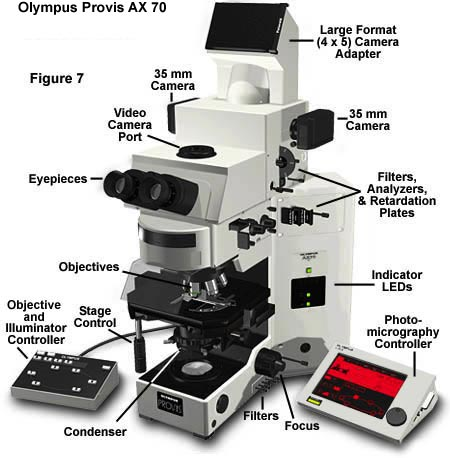 Photomicrography film cameras finally the large ax 70 and 80 provis research microscopes have a u photo camera system figure 7 which has much the same capabilities as the pm 30 ccuart Gallery