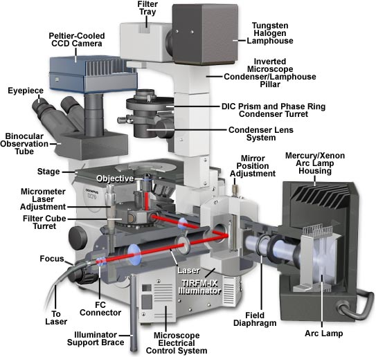 specialized microscopy techniques olympus ix70 microscope cutaway specialized microscopy techniques olympus ix70 microscope cutaway diagram