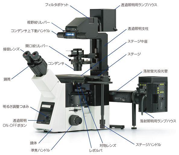 倒立型顕微鏡の操作部位