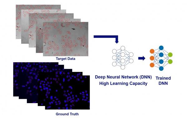 神经网络训练