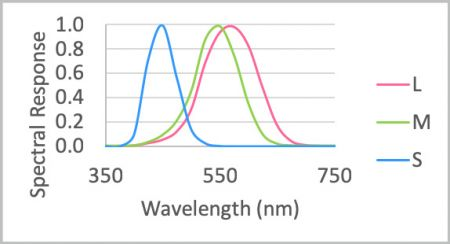 Spectrum sensitivity of the human eye